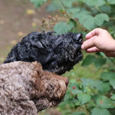 Dog Training and Behaviour-thumbnail