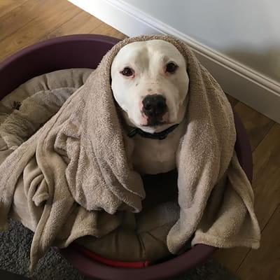 Pet Sitting-thumbnail